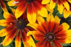 Ζωηρόχρωμο λουλούδι Στοκ φωτογραφίες με δικαίωμα ελεύθερης χρήσης