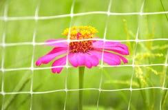 ζωηρόχρωμο λουλούδι Στοκ Εικόνες