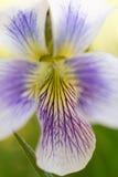 ζωηρόχρωμο λουλούδι Στοκ φωτογραφία με δικαίωμα ελεύθερης χρήσης