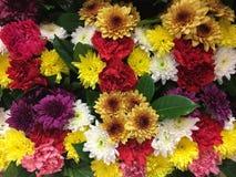 ζωηρόχρωμο λουλούδι Στοκ εικόνες με δικαίωμα ελεύθερης χρήσης