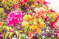 ζωηρόχρωμο λουλούδι Στοκ εικόνα με δικαίωμα ελεύθερης χρήσης