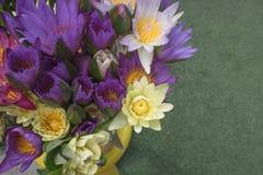 Ζωηρόχρωμο λουλούδι Lotus Στοκ εικόνες με δικαίωμα ελεύθερης χρήσης