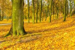Ζωηρόχρωμο πάρκο πτώσης στη μικρή πόλη στην Πολωνία Στοκ φωτογραφία με δικαίωμα ελεύθερης χρήσης