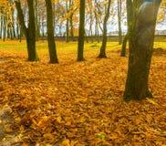 Ζωηρόχρωμο πάρκο πτώσης στη μικρή πόλη στην Πολωνία Στοκ Φωτογραφία