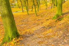 Ζωηρόχρωμο πάρκο πτώσης στη μικρή πόλη στην Πολωνία Στοκ Εικόνα