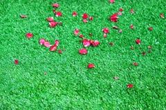 Ζωηρόχρωμο πέταλο των κόκκινων ροδαλών λουλουδιών στην τεχνητή πράσινη χλόη για το υπόβαθρο στοκ εικόνα