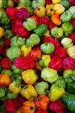 ζωηρόχρωμο πιπέρι τσίλι Στοκ Εικόνες