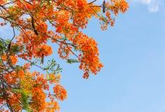 ζωηρόχρωμο πορτοκάλι λο&u στοκ εικόνες