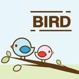 Ζωηρόχρωμο πουλί ζεύγους Στοκ Εικόνες