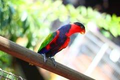 Ζωηρόχρωμο πουλί παπαγάλων στοκ εικόνες