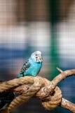 Ζωηρόχρωμο πουλί Στοκ φωτογραφίες με δικαίωμα ελεύθερης χρήσης