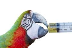 Ζωηρόχρωμο πράσινου και κόκκινου macaw πουλιών παπαγάλων, Στοκ Εικόνες