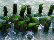 Ζωηρόχρωμο πράσινο φύκι βρύου στην παλαιά ξυλεία Στοκ φωτογραφία με δικαίωμα ελεύθερης χρήσης