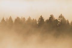 Ζωηρόχρωμο πρωί στο τέλος του καλοκαιριού Ζωηρόχρωμο θερινό πρωί με τη χρυσή ελαφριά και ριγωτή ομίχλη μεταξύ των λόφων Στοκ Φωτογραφία