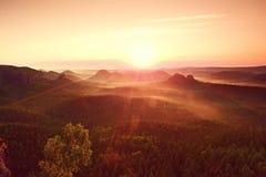 Ζωηρόχρωμο πρωί της Misty Άποψη πέρα από το δέντρο σημύδων στο βαθύ σύνολο κοιλάδων του βαριού τοπίου φθινοπώρου υδρονέφωσης μετά Στοκ Φωτογραφία