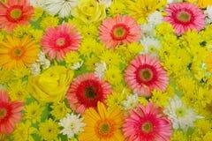 ζωηρόχρωμο πρότυπο λουλουδιών ανασκόπησης Στοκ Εικόνα