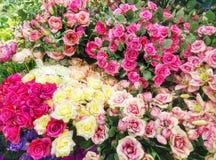 ζωηρόχρωμο πρότυπο λουλ&om Στοκ φωτογραφία με δικαίωμα ελεύθερης χρήσης