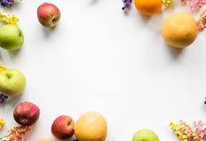 Ζωηρόχρωμο πλαίσιο φρούτων & λουλουδιών Στοκ Εικόνες