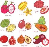 Ζωηρόχρωμο συρμένο χέρι σύνολο με τα τροπικά εξωτικά φρούτα Διάνυσμα grap Στοκ Εικόνες