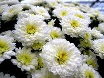 Ζωηρόχρωμο σχέδιο Λουλούδια καθαρός Στοκ φωτογραφίες με δικαίωμα ελεύθερης χρήσης