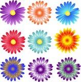 Ζωηρόχρωμο σχέδιο λουλουδιών, μαργαρίτα Στοκ φωτογραφίες με δικαίωμα ελεύθερης χρήσης