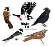 Ζωηρόχρωμο σύνολο πουλιών επίσης corel σύρετε το διάνυσμα απεικόνισης Στοκ φωτογραφίες με δικαίωμα ελεύθερης χρήσης