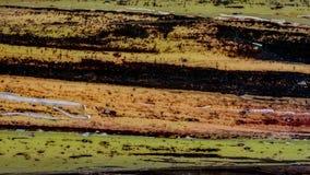 Ζωηρόχρωμο σύσταση ή υπόβαθρο φλοιών δέντρων μπανανών στοκ φωτογραφία με δικαίωμα ελεύθερης χρήσης