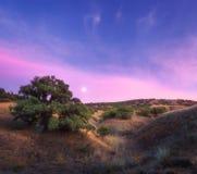 Ζωηρόχρωμο τοπίο νύχτας με το πράσινο δέντρο στο λόφο στοκ εικόνες με δικαίωμα ελεύθερης χρήσης