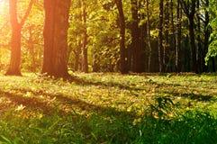Ζωηρόχρωμο τοπίο φθινοπώρου - γραφικό δάσος φθινοπώρου το πρώιμο φθινόπωρο με τα πεσμένα ξηρά φύλλα φθινοπώρου κάτω από την ηλιοφ Στοκ Φωτογραφίες