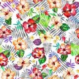 Ζωηρόχρωμο τροπικό σχέδιο με τα φύλλα φοινικών που απομονώνεται σε ένα λευκό στοκ εικόνες