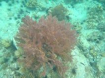 Ζωηρόχρωμο υποβρύχιο κοράλλι στη θάλασσα Στοκ Φωτογραφία