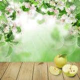 Ζωηρόχρωμο υπόβαθρο ανθών ανοίξεων με τα φρούτα της Apple Στοκ Εικόνες