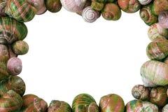 Ζωηρόχρωμο υπόβαθρο κοχυλιών σαλιγκαριών στοκ εικόνα με δικαίωμα ελεύθερης χρήσης