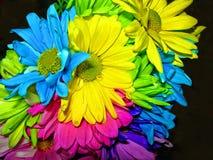Ζωηρόχρωμο υπόβαθρο λουλουδιών νύχτας στοκ εικόνα με δικαίωμα ελεύθερης χρήσης
