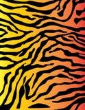 Ζωηρόχρωμο υπόβαθρο σχεδίων λωρίδων με ραβδώσεις ή τιγρών Στοκ Εικόνα