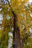 Ζωηρόχρωμο φαλακρό κυπαρίσσι που αυξάνεται από τη γλυπτή ομάδα Glorieta de Bécquer στο πάρκο της Μαρίας Luisa, Σεβίλλη στοκ φωτογραφίες με δικαίωμα ελεύθερης χρήσης