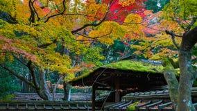 Ζωηρόχρωμο φθινόπωρο koto-στο ναό στο Κιότο Στοκ Φωτογραφίες