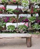 Ζωηρόχρωμο φρέσκο λουλούδι που που κωπηλατεί στον ξύλινο δίσκο στοκ φωτογραφία