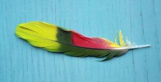 ζωηρόχρωμο φτερό πουλιών Στοκ Φωτογραφίες