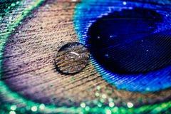 Ζωηρόχρωμο φτερό peacock με τις πτώσεις και τα φω'τα νερού bokeh Συμπυκνωμένος Στοκ Εικόνες