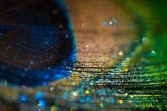 Ζωηρόχρωμο φτερό peacock Στοκ φωτογραφίες με δικαίωμα ελεύθερης χρήσης
