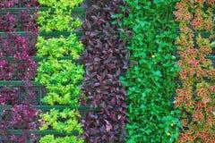 ζωηρόχρωμο φυτό προτύπων μοναδικό Στοκ φωτογραφίες με δικαίωμα ελεύθερης χρήσης