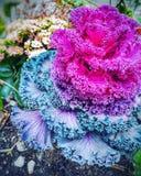 Ζωηρόχρωμο φυτό Στοκ Εικόνες