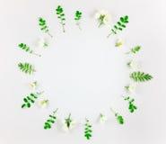 Ζωηρόχρωμο φωτεινό στρογγυλό σχέδιο των φύλλων και των λουλουδιών Επίπεδος βάλτε, τοπ άποψη Στοκ εικόνα με δικαίωμα ελεύθερης χρήσης
