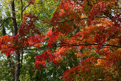 ζωηρόχρωμο φύλλωμα φθινο&pi Στοκ εικόνα με δικαίωμα ελεύθερης χρήσης