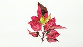 ζωηρόχρωμο φύλλο Στοκ Εικόνες