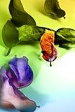 ζωηρόχρωμο φύλλο Ελεύθερη απεικόνιση δικαιώματος