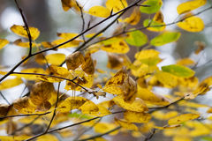 Ζωηρόχρωμο φύλλωμα στο υπόβαθρο ουρανού φύλλων φθινοπώρου πάρκων φθινοπώρου Στοκ φωτογραφία με δικαίωμα ελεύθερης χρήσης