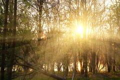 Ζωηρόχρωμο χρυσό δάσος ηλιοβασιλέματος την άνοιξη στοκ φωτογραφία με δικαίωμα ελεύθερης χρήσης