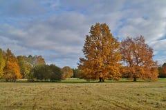 Ζωηρόχρωμο, όμορφο φθινόπωρο - χρυσό πολωνικό φθινόπωρο - αλέα φθινοπώρου Στοκ Εικόνα
